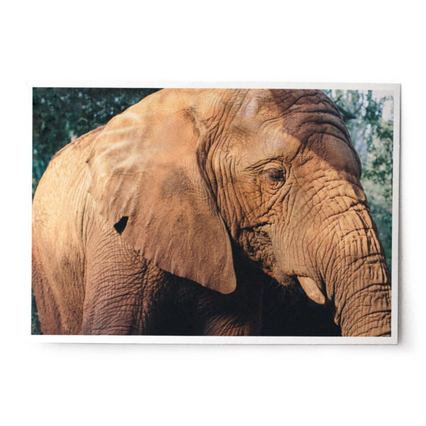 WS DR 0023 mock print e1562836614300