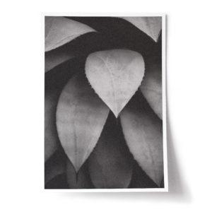 WS DR 0029 print